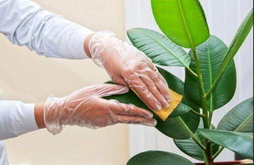 Yapay Bitkilerin Ömrünü Uzatacak Bakım Önerileri
