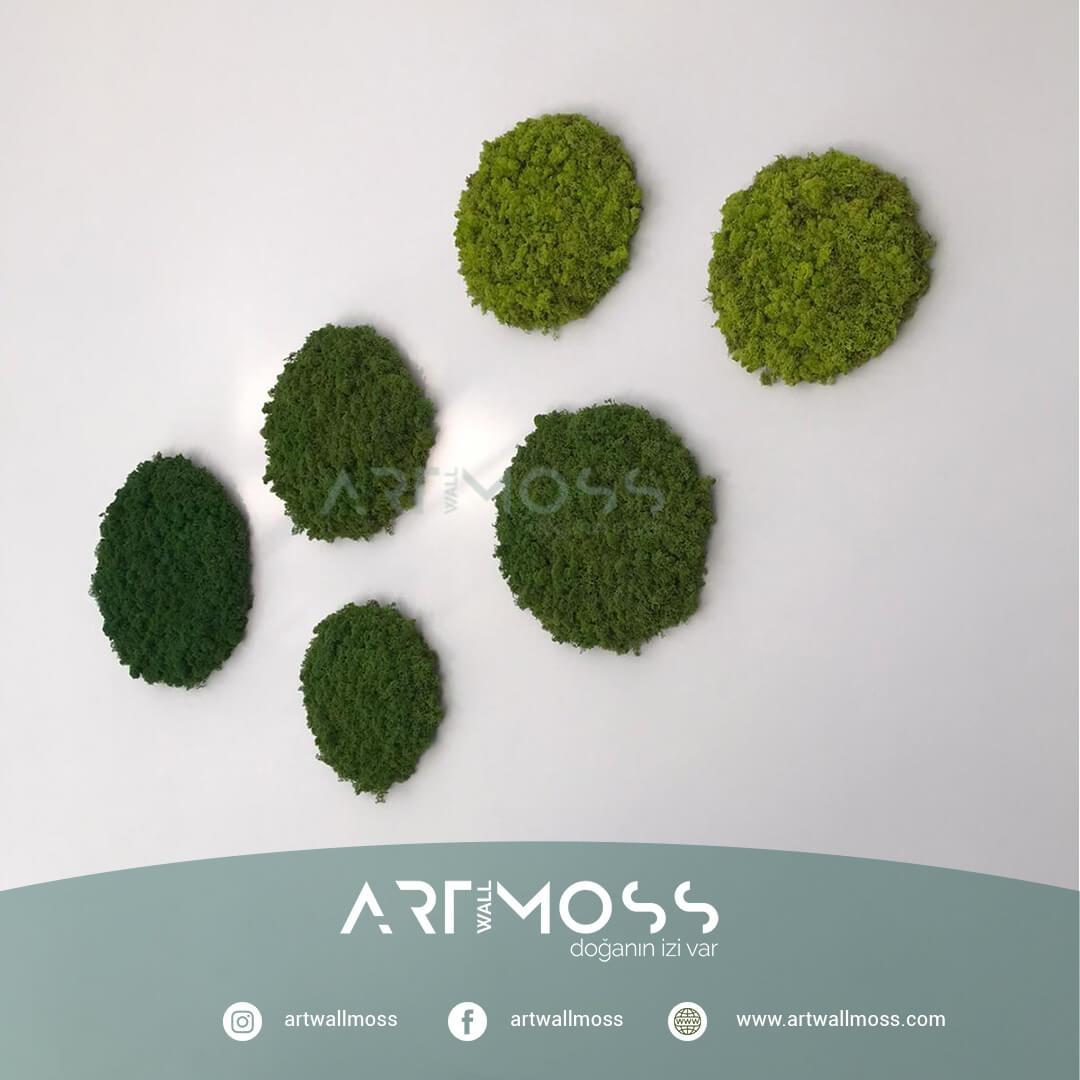Lichen Moss Tasarımı